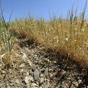 Sécheresse: pour l'économie agricole, la facture cumulée se chiffre en milliards