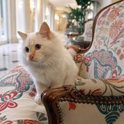 Vacances : quelles solutions pour faire garder votre animal de compagnie ?