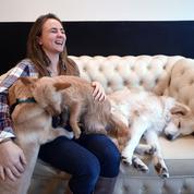 Un premier bar à chiens va ouvrir ses portes à New York