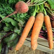 L'agriculture biologique continue sa progression en Europe
