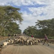 Au Kenya, les éleveurs samburus envahissent les ranchs