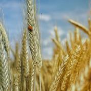 «En France, le politiquement correct et la bien-pensance ont rejeté les OGM sans débat»