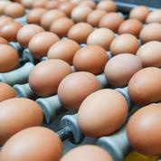 Œufs contaminés : « Aucune trace de fipronil dans les élevages français »