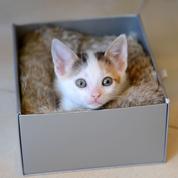 Un anti-Nobel pour un physicien qui prouve que les chats sont liquides