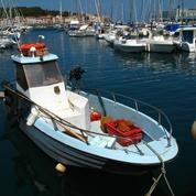 Les ports, nurseries inattendues pour poissons juvéniles