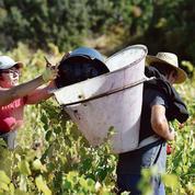 La récolte mondiale de vin au plus bas depuis 1961