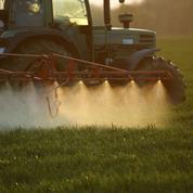 Glyphosate: un herbicide qui est devenu une affaire d'États