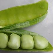 Gesse, le «pois carré» du potager