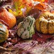 Légumes du jardin: faites vos provisions pour l'hiver !