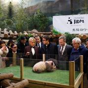 Brigitte Macron a baptisé le bébé panda prêté par la Chine «Yuan Meng»