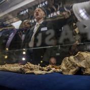 Plus ancien que Lucy, l'extraordinaire squelette de Little Foot a enfin été dévoilé