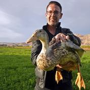 Du foie gras au pays des Pyramides