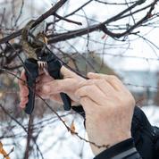 Jardin: prenez soin de vos arbres malades