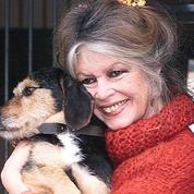 Brigitte Bardot «en a marre» de la politique d'Emmanuel Macron envers les animaux