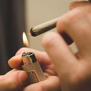 Cannabis : «Les filières sont très cloisonnées pour limiter les risques»