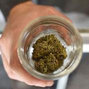 L'usage récréatif du cannabis devient légal en Californie