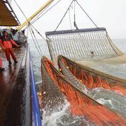 Mobilisation en Europe contre la pêche électrique