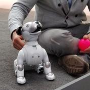 La star du CES est un chien robot