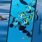 30 ans du «Grand Bleu» : 6 spots de plongée à couper le souffle !