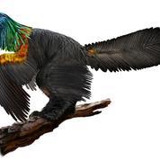 Un dinosaure «arc-en-ciel» aux plumes irisées découvert en Chine