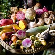 Panais, pâtissons, rutabagas... les légumes atypiques ont toujours autant la cote
