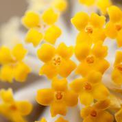 L'enivrant parfum des fleurs de l'hiver