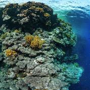 SOS corail en danger