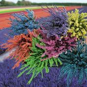 Offrir des fleurs en circuit court pour sauver les horticulteurs français
