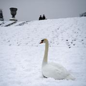 Que se cache-t-il sous le mot «neige» ?
