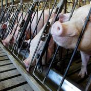 Des OGM interdits trouvés dans des aliments pour animaux en France