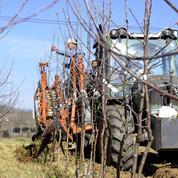 L'agriculture bio française gagne du terrain