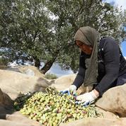 La Tunisie à l'honneur au Salon de l'agriculture