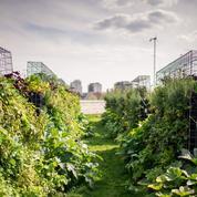 Les fermes urbaines fleurissent en France