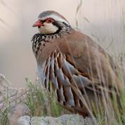 Les oiseaux disparaissent des campagnes françaises