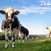 Le gouvernement veut développer la méthanisation dans les exploitations agricoles