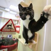 Espérant retomber sur ses pattes, le Parti socialiste va adopter un chat