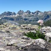 Les plantes «fuient» le réchauffement pour se réfugier sur les sommets