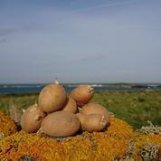 Au large du Finistère, la Ferme de Quéménès cultive la terre en pleine mer d'Iroise