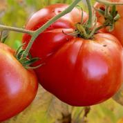 L'UE autorise les agriculteurs bio à vendre leurs propres semences