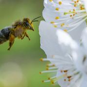 Néonicotinoïdes: apiculteurs et chasseurs se félicitent de leur interdiction