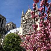 Que savez-vous sur les fleurs de Paris?