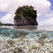 Quand activités humaines et climat se conjuguent pour massacrer les coraux