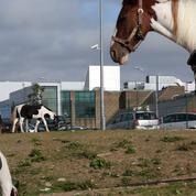 Apple renonce à son projet de data center géant en Irlande
