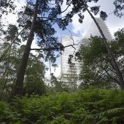 Les arbres, vrais Parisiens