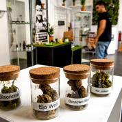 Près de Lille, un magasin propose de nombreux produits à base de cannabis