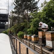 Pendant le tournoi, Roland-Garros fait son miel