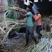 L'Inde en passe de détrôner le Brésil comme premier producteur mondial de sucre