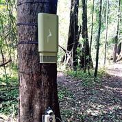 Dans la forêt amazonienne, des micros pour recenser les animaux