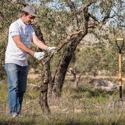 En Espagne, adopter un olivier pour sauver le village d'Oliete
