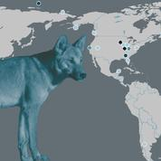 Les chiens européens ont eux aussi conquis l'Amérique en 1492